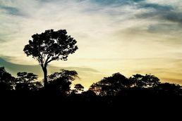 Einbruch der Nacht im Amazonas von Kolumbien