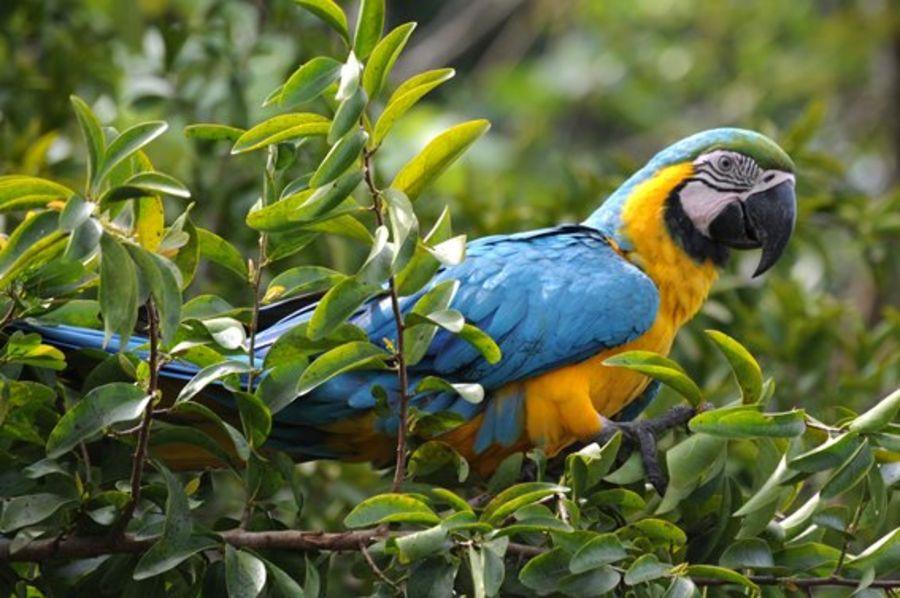 Vogel beim Kolumbien Birding