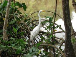 Birdwatching im Orinoco Delta von Venezuela