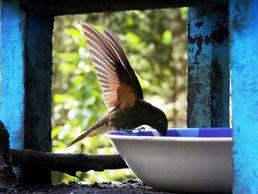 Kolibri während einer Kolumbien Rundreise