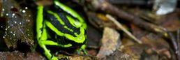 Verschiedenste Tierarten im Amazonas von Kolumbien