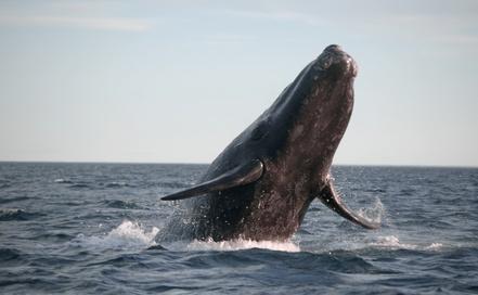 Walbeobachtung an der Pazifikküste Kolumbiens