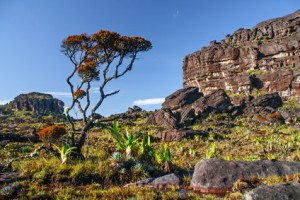 Tafelberg in der Gran Sabana