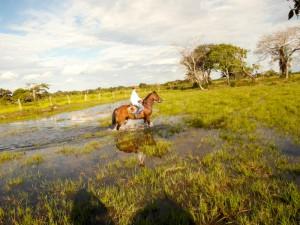 Cowboy auf dem Llanos Weideland