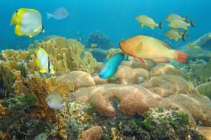 Unterwasserwelt von Bonaire