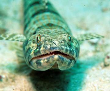 Unterwasserleben niederländische Antillen