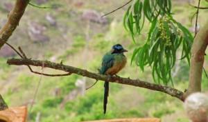 birding-mesa-de-los-santos