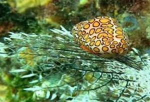 Unterwasserleben der dominikansichen Republik