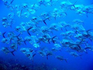 Bonaire Permits