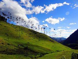Die Region Valle de Cocora während der Kolumbien Abenteuer Rundreise