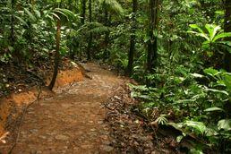 Wald an der Küste Kolumbiens