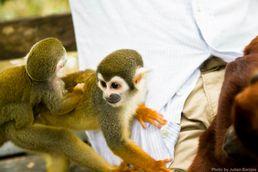 Tiere im Amazonas