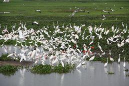 Tier im Llanos Gebiet von Venezuela
