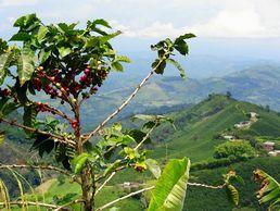 Die Kaffeezone auf der Kolumbien Abenteuer Rundreise