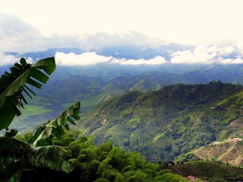 Kaffeezone in Kolumbien
