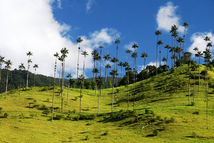 Das Valle de Cocora in Kolumbien