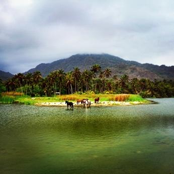 Pferde an der Karibikküste Kolumbien