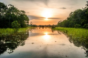 Sumpflandschaft in Kolumbien