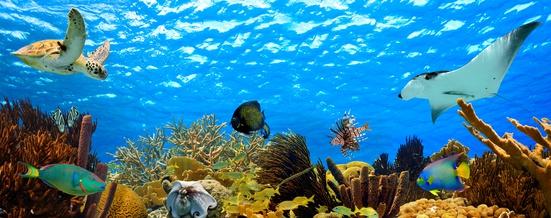Unterwasserleben der Karibik
