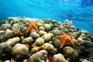 Korallen in der Karibik