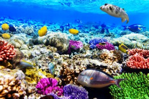 Bunte Fische und Korallen