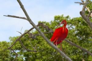 Vogel in Venezuela