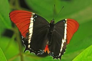 fliegendes Tier in Venezuela