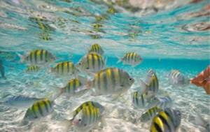 Fischschwarm dominikanische Republik