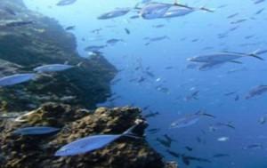 Fische an der Nordküste der Dominikanischen Republik