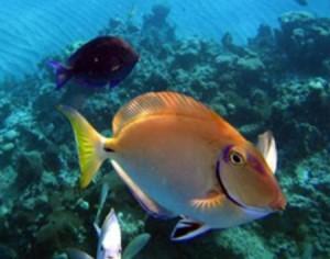 Fische in der dominikanische Republik