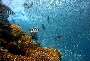 Korallenschwamm mit bunten Fischen